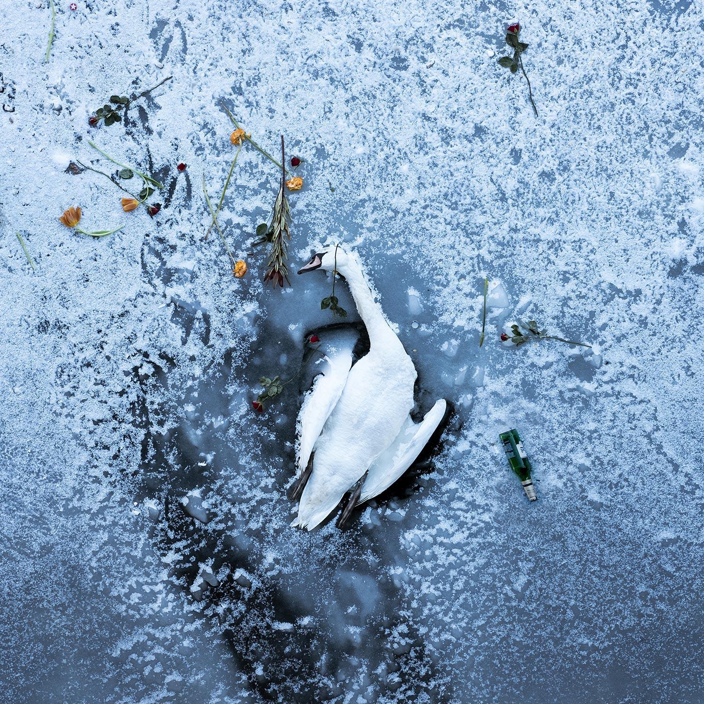 1_Fabian-Tegeler-_-Dead-Swan